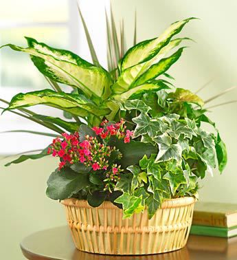 Duluth Plants and Garden Gifts