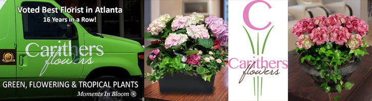 Blooming Plants, Custom Gardens & Exotic Orchids