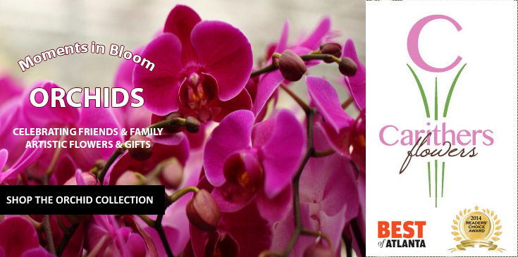 Exotic Orchid Gifts, Phalaenopsis Orchids, Cymbidiums, orchid gardens with same day delivery in Atlanta and USA. Carithers Flowers, Voted Best Florist Atlanta