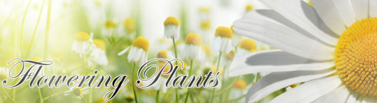 Flowering Plants - Blooming Plant Gardens