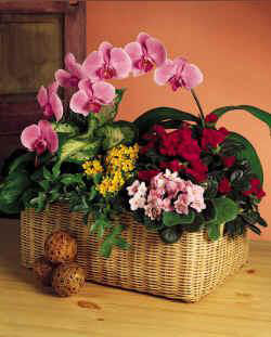Deliver Orchid Funeral Flowers