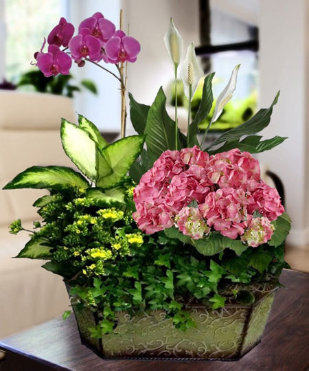 Teleflora 39 S Upsy Daisy Middot Florist In Newark Flower Delivery Treat Them To A Day At The