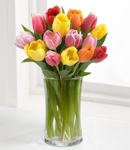 Tulips Tulip Holland Tulip