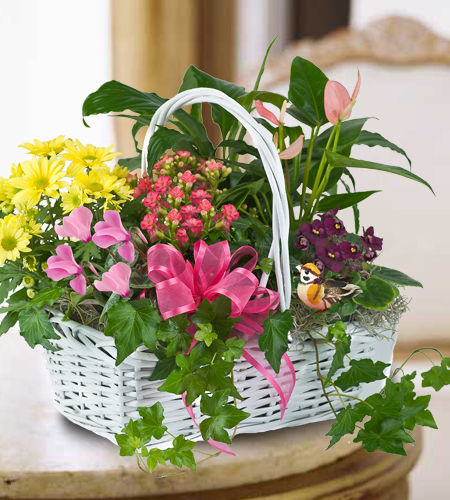 Roswell Plants and Garden Gifts