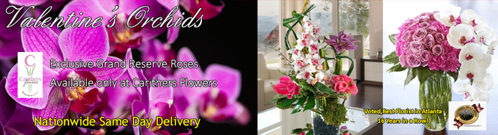 Valentine's Day | Exotic Orchids & Tropic Flowers