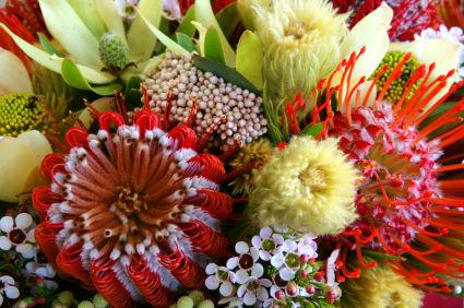 Dried Protea Bouquet