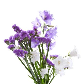 Limonium Limonium Flower Limonium Flowers