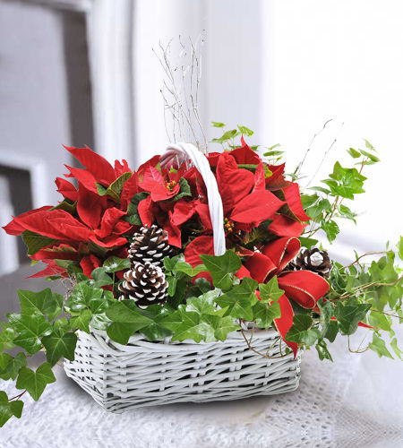 Custom Poinsettia Garden Basket